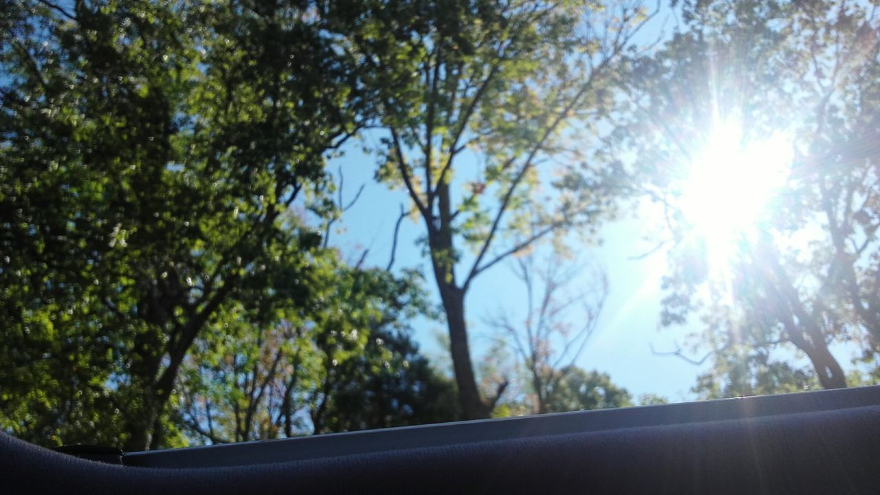 Sun Roof Tree Sunlight Sun Sunny Growth Sunbeam Branch Lens Flare Nature Day Bright Flower Focus On Foreground Summer Beauty In Nature Scenics Tranquility Outdoors Sky Tranquil Scene
