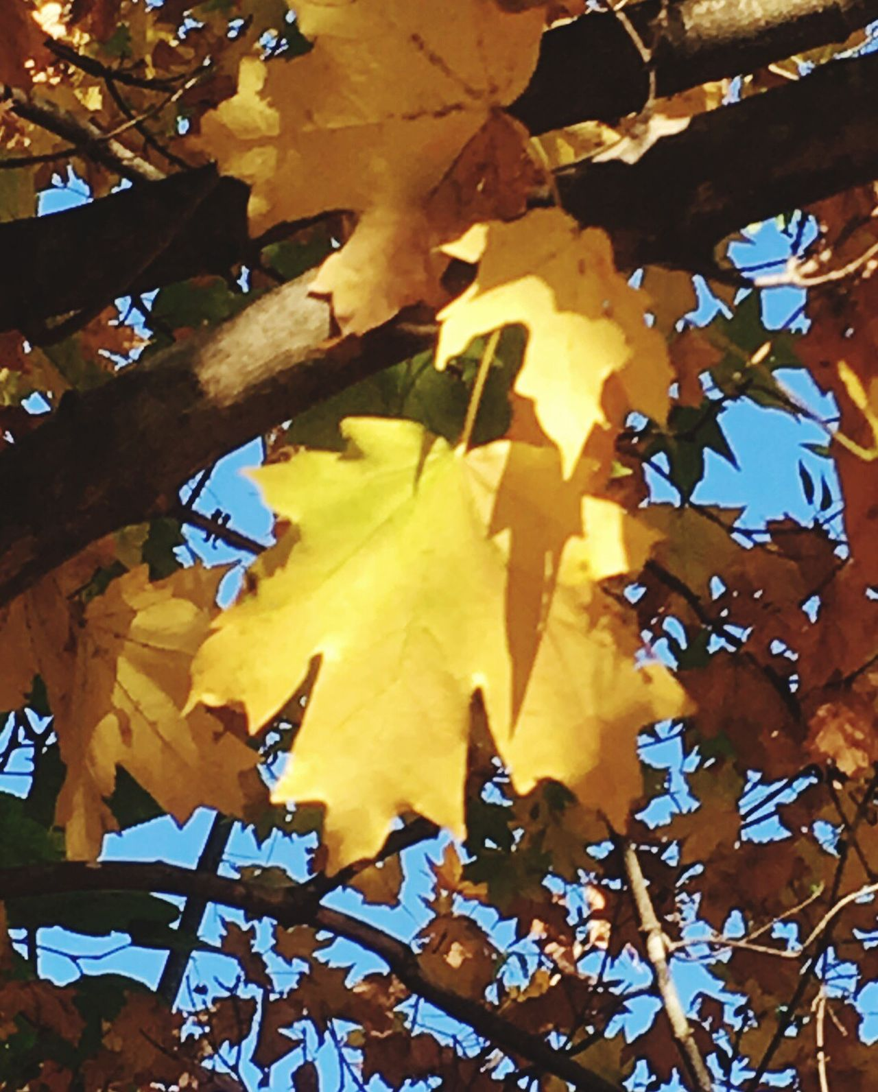 Leaf Autumn Nature Beauty In Nature Tree Outdoors