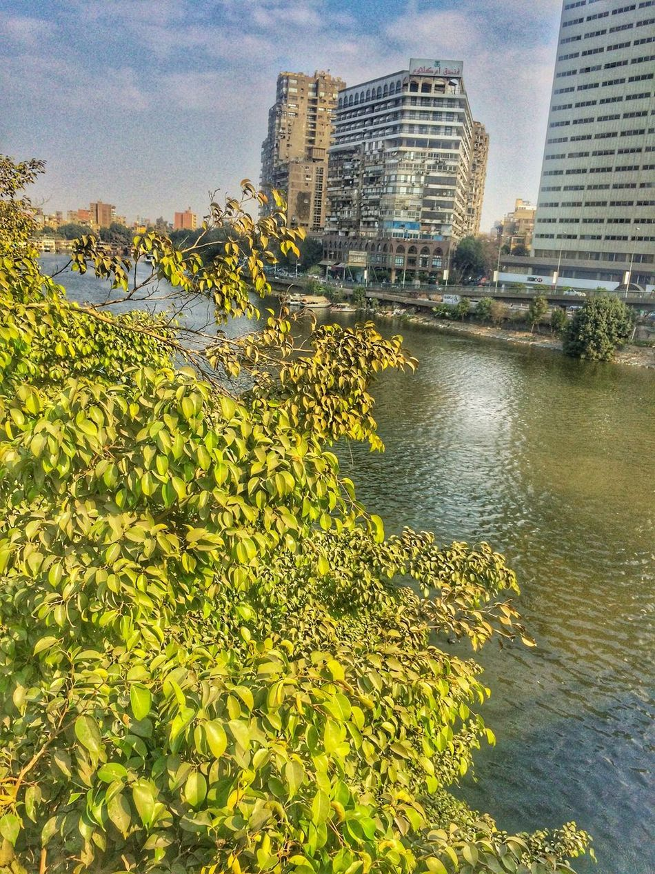 IPhoneography Architecture Building Exterior City Tree Iphonephotography مصر Thisisegypt Liveloveegypt Livelovecairo شجر River Nile River Built Structure Growth Skyscraper No People Water Sky Cityscape Outdoors Day Modern Nature Good Morning!