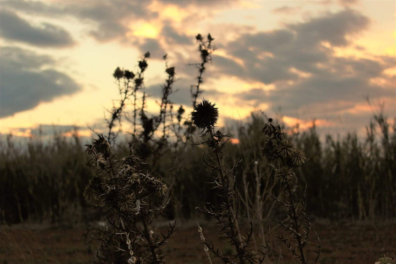 Nature Sunset Growth Beauty In Nature No People Outdoors Cloud - Sky Close-up Day Photography Plant