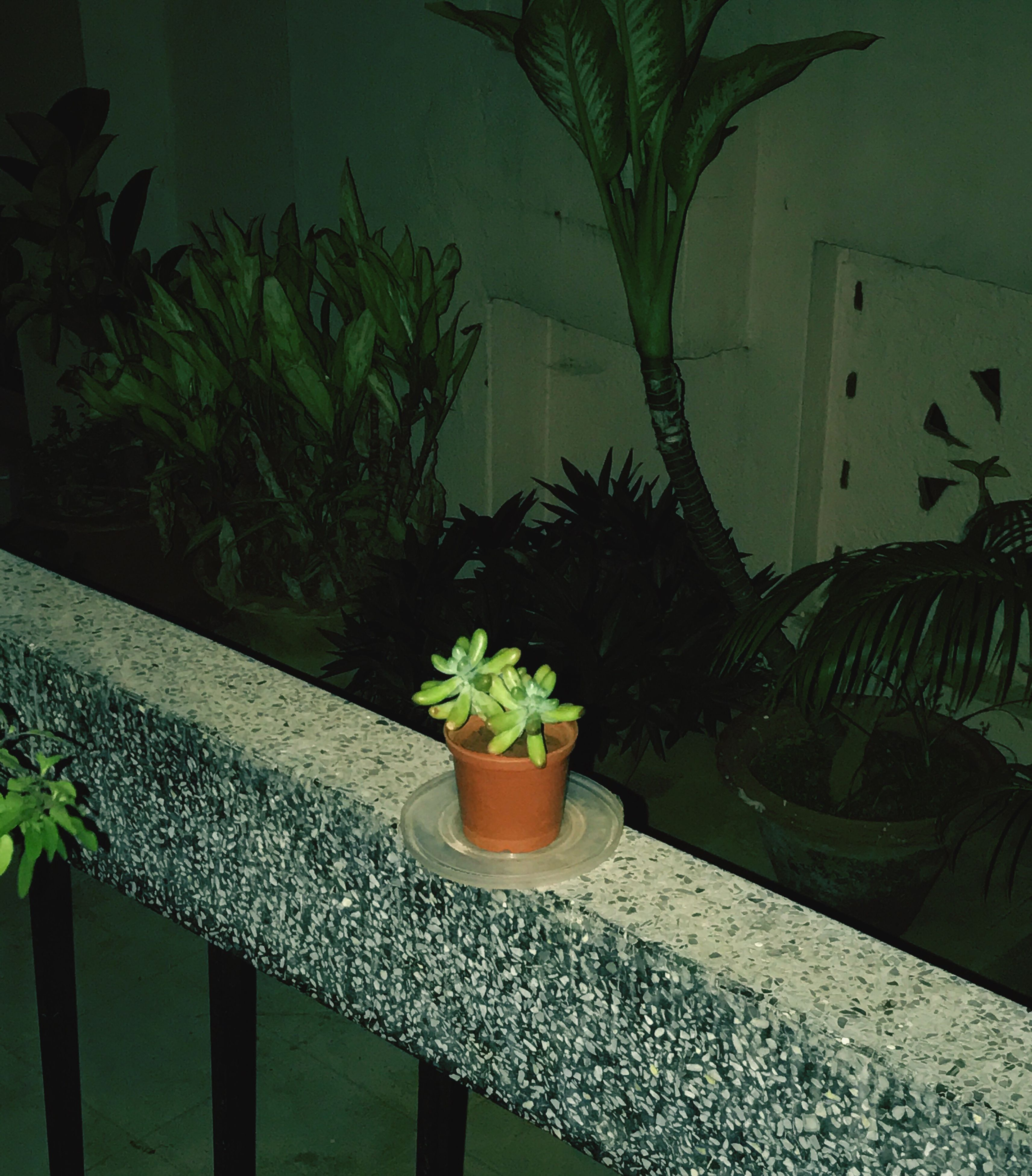 potted plant, plant, flower, growth, no people, nature, table, leaf, green color, freshness, beauty in nature, close-up, day, cactus, flower head, fragility, outdoors