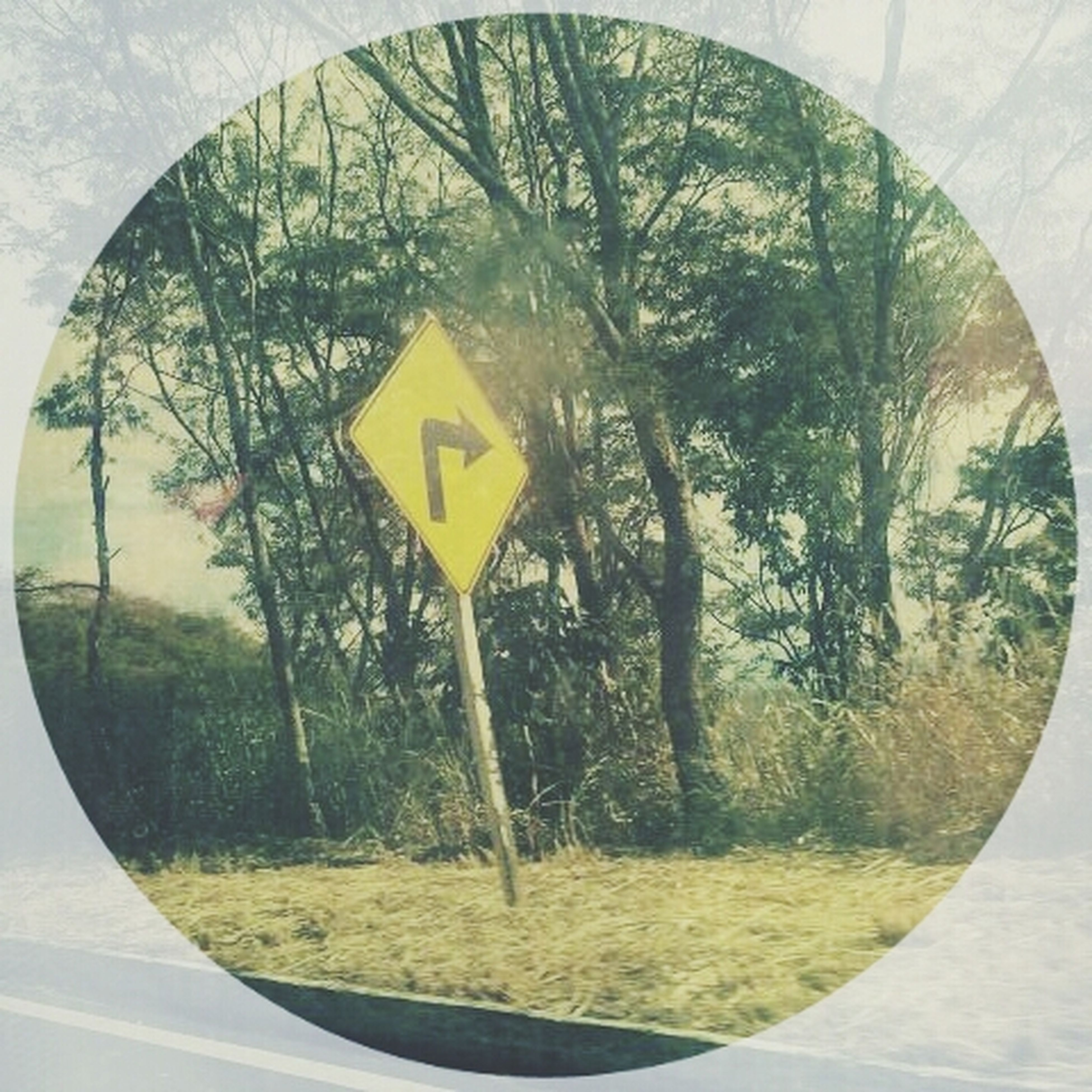 tree, circle, grass, geometric shape, communication, text, day, transportation, yellow, green color, field, no people, nature, close-up, growth, outdoors, round, western script, road sign, glass - material