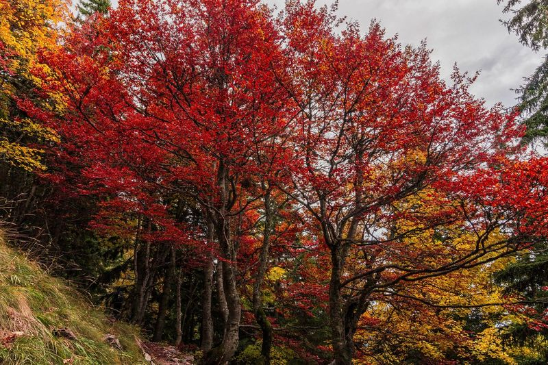 Red Tree Nature Outdoors No People Day Beauty In Nature
