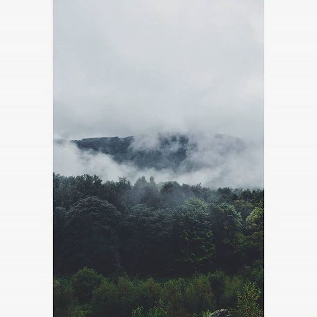 Nature Ambiance Moment GreyDay Brume Landscape Discoverworld Voyages Beautifulplace Beautifulmoment Ontheroad Roadtrip Photo Monthermé Ardennes Roclatour Aftertherain Poetryinnature Natural Motherearth Beautyinnature  Randonnée Walkaway Winter Cold