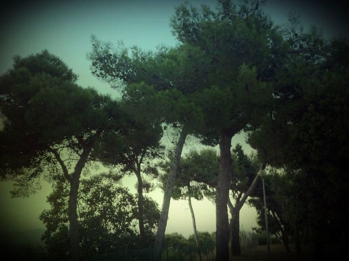 Taking Photos Landscape Panorama Nature