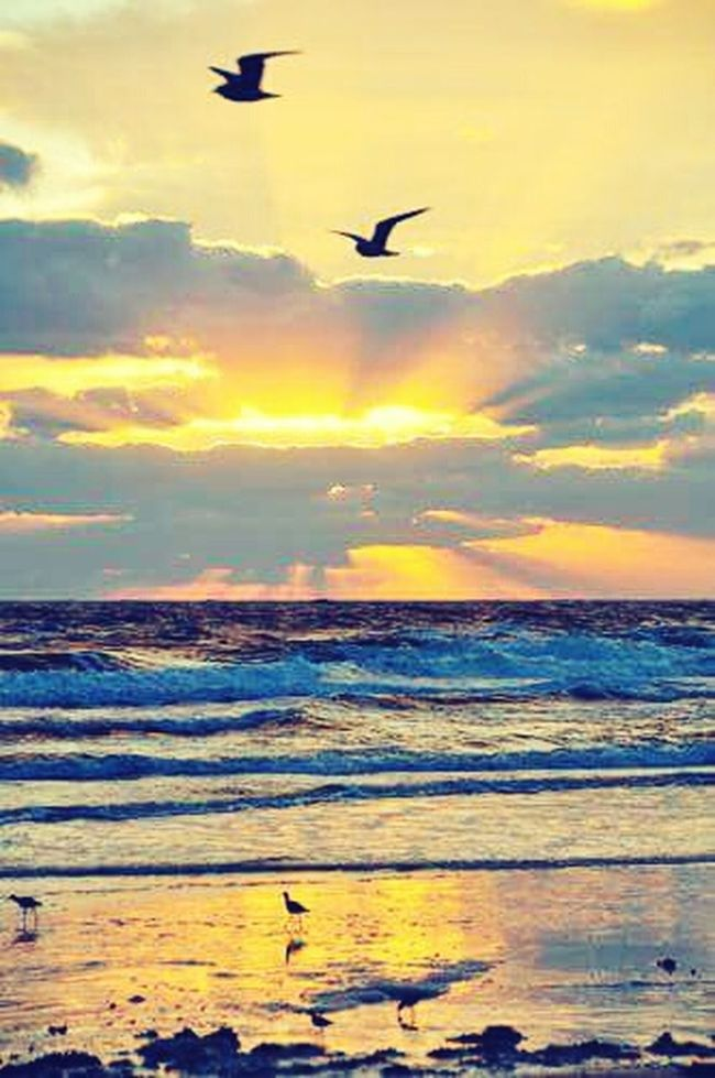Good Morning World! Have A Good Day Hello World Taking Photos Check This Out Beach Photography Bali Beach Water_collection Sunrise_sunsets_aroundworld Little Birds Watter Reflection Waterfall_collection Sea And Sky Sky And Clouds Enjoying Life Sunset Silhouettes Urban Gardening Eyem Best Shots EyeEm Nature Lover EyeEm Gallery EyeEm Best Shots - Nature EyeEm Indonesia Beautiful Place I Love Nature! I Love Indonesia