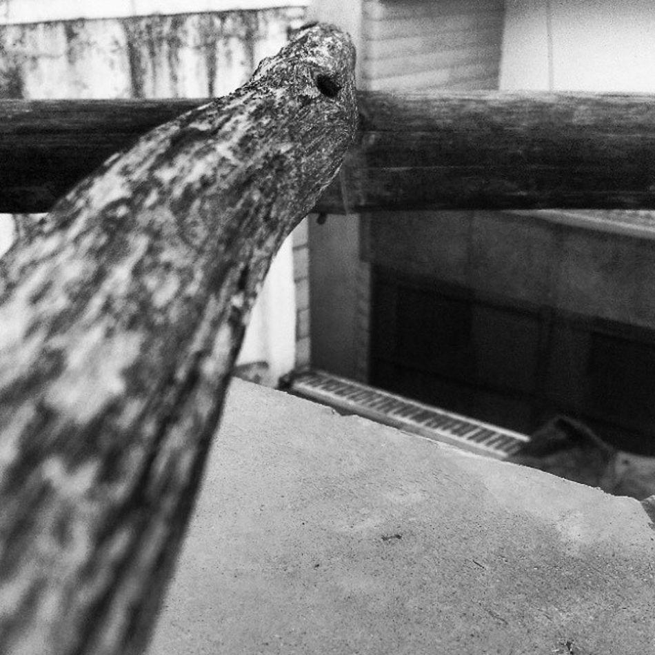 Instapic B_n_w Wood Centre_focus Ladder 😊