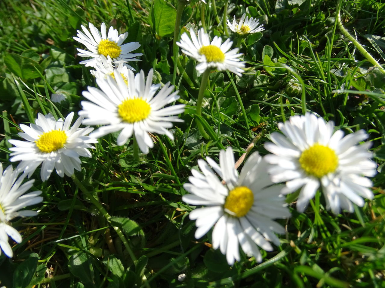 flower, nature, petal, growth, beauty in nature, blooming, freshness, yellow, daisy, white color, fragility, plant, flower head, field, outdoors, no people, day, close-up