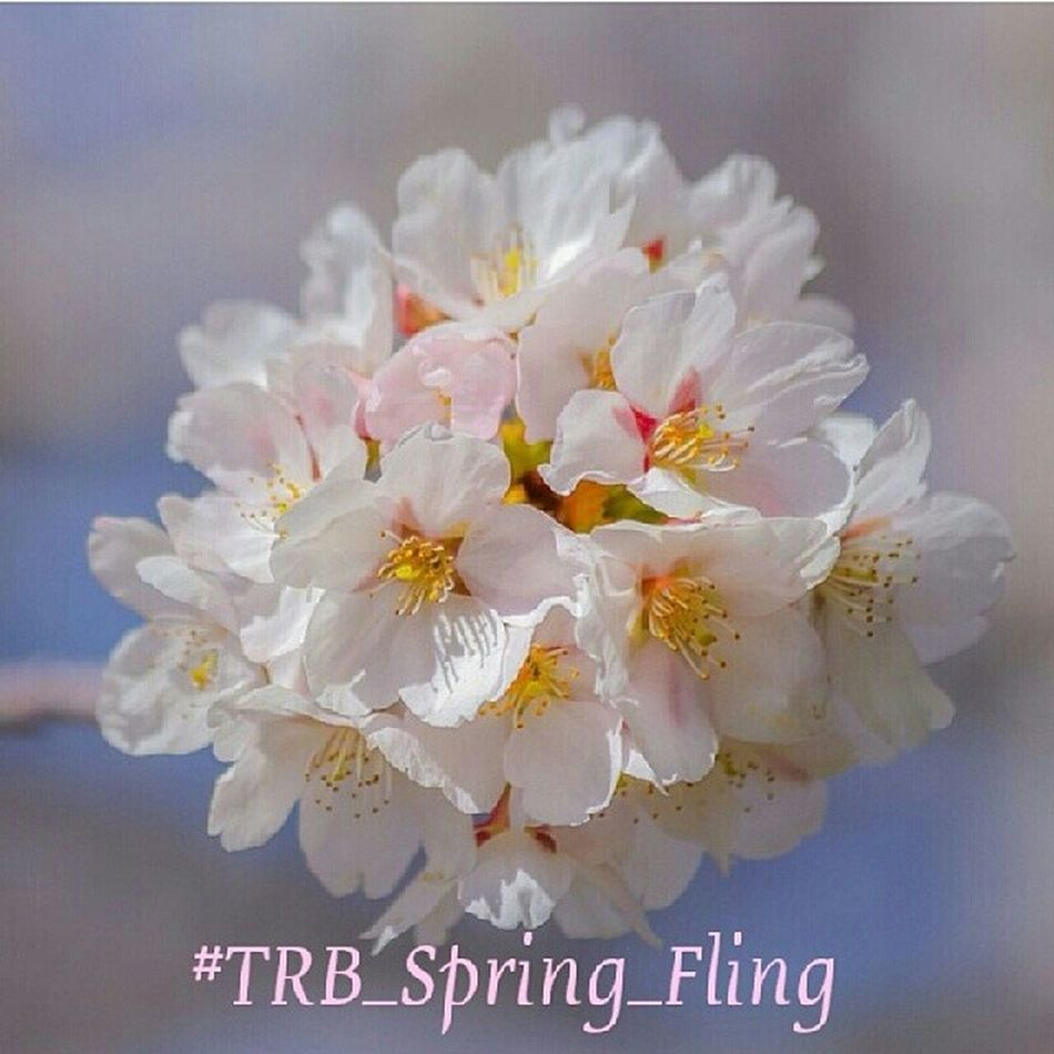 Trailblazers! This weeks challenge is all about Spring!! #trb_spring_fling Spring is here and its time to celebrate the season.. Spring flowers, rural landscapes, tree blossoms, baby livestock, portraits, etc. All things Spring!! Enter your pics (new and Trailblazers_rurex Trb_spring_fling