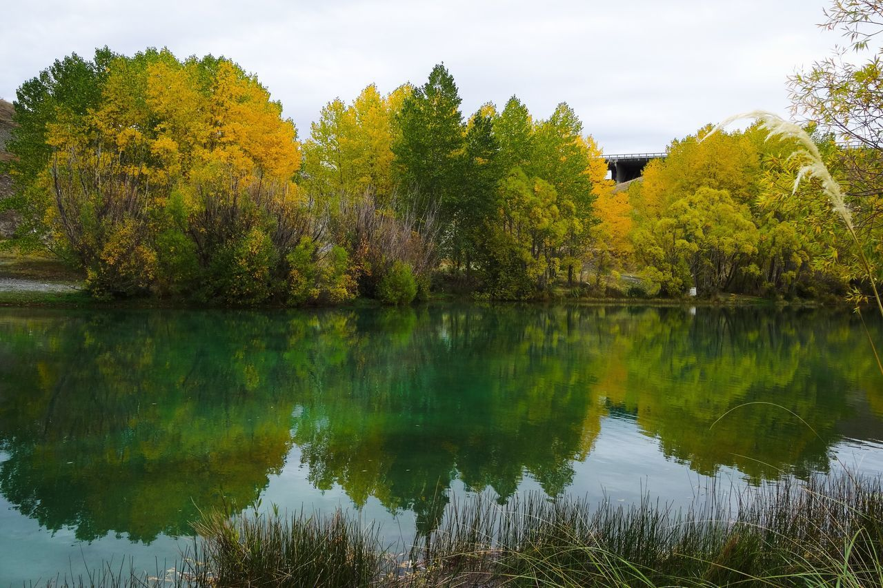 Tree Nature Reflection Beauty In Nature Water Lake Scenics Tranquil Scene No People Tranquility Sky Growth Outdoors Bird Day Trees Water Reflections Mirror Lake Autumn Autumn Colors Autumn🍁🍁🍁 Autumn Leaves Autumn Collection New Zealand River