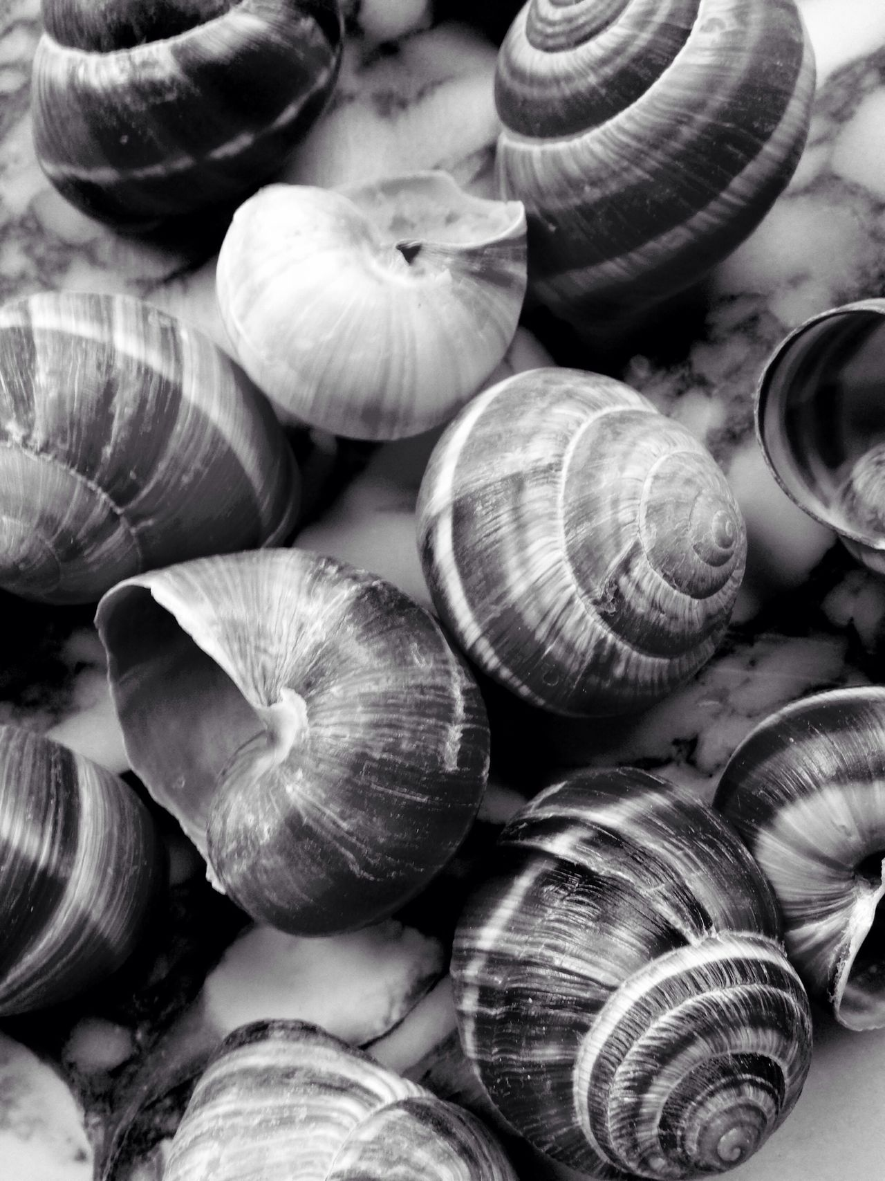 Food And Drink Food Garlic Bulb Backgrounds Healthy Eating No People Close-up Freshness Day Eeyem Photography Eyeem Food  Snail 😚 Black & White Chicago Escargot Blackandwhite