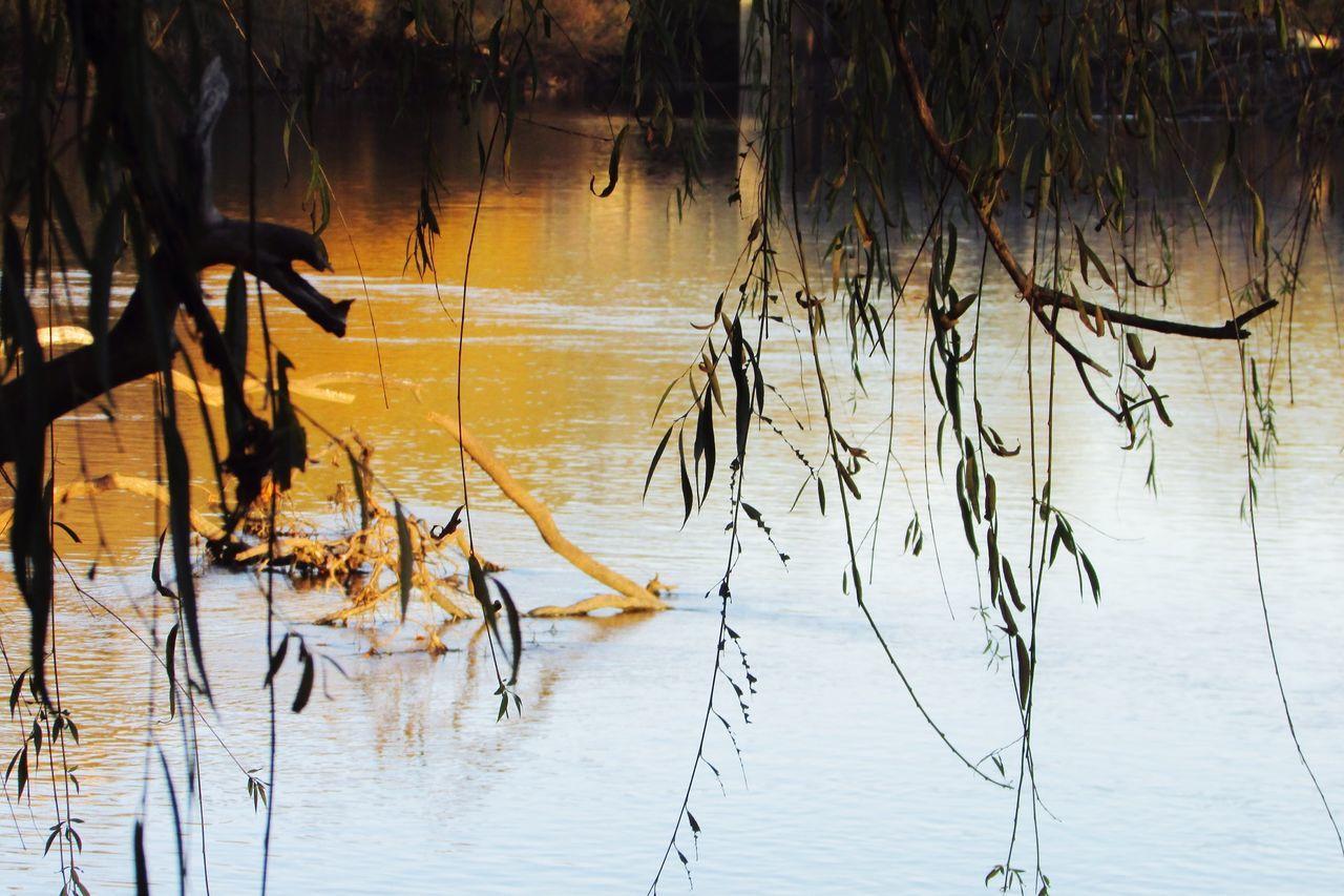Autumn Colors Autumn Murrayriver River Beautiful Nature