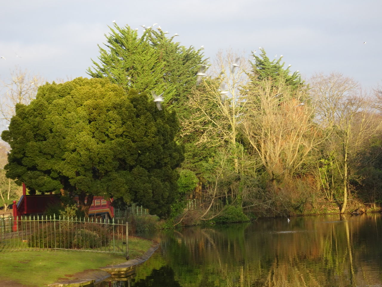 Trees And Bushes Outdoors Winters Day Park Nature Water Lake Grass Scenics Reflection Growth Beauty In Nature Tranquil Scene Sky
