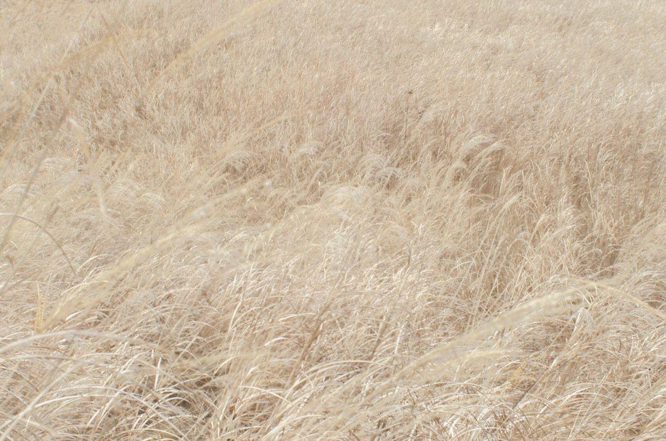 目の前の世界 Nature Beauty In Nature Precious Moments Of Life Silvergrass Landscape_photography Emoticon
