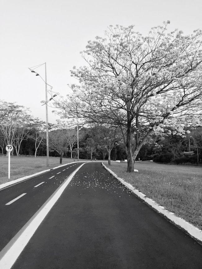 Monochrome Photography First Eyeem Photo Ipê Tree Sky