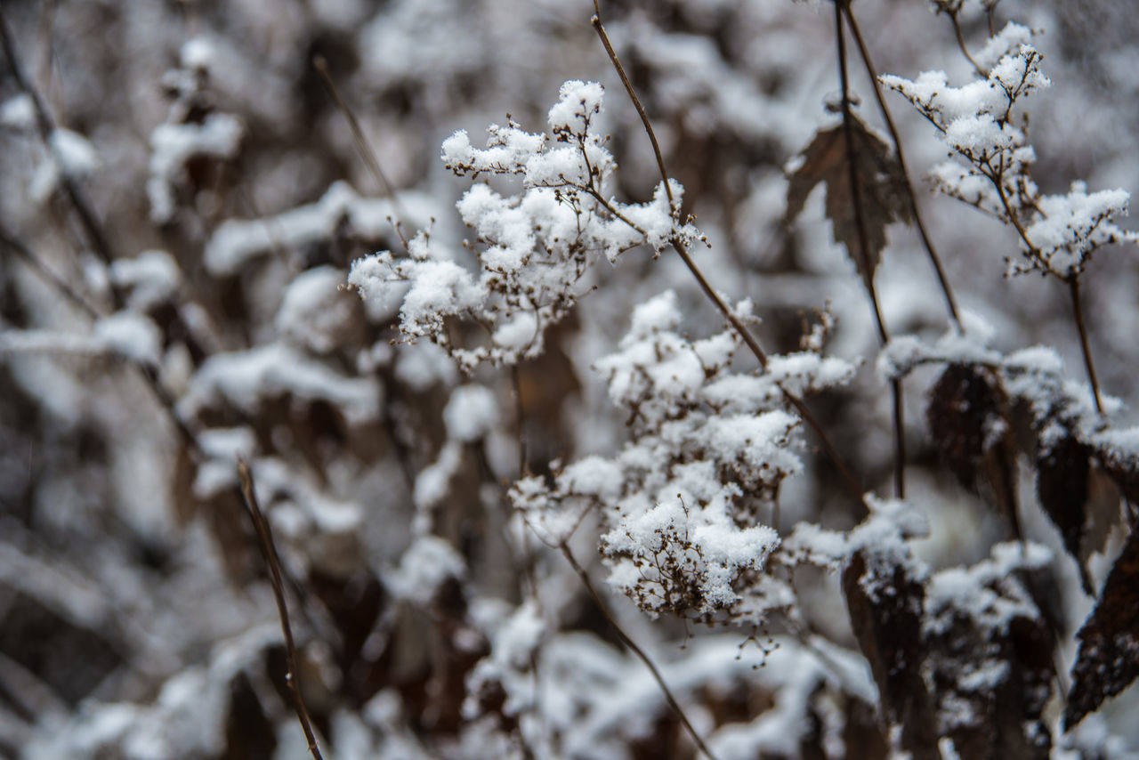 Mon Repos (Vyborg) https://en.wikipedia.org/wiki/Mon_Repos_(Vyborg) Beauty In Nature Branch Close-up Cold Temperature Day Dried Grass Dried Plant Growth Nature No People Outdoors Plant Snow Tranquility Tree White Color Winter