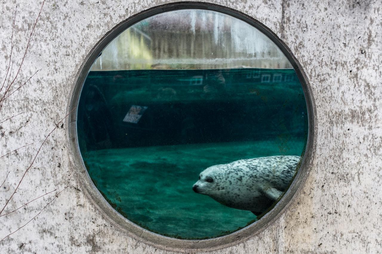 Seehund im Zoo von Odense Animal Themes Animals Behind The Window Fuji X100s Glass - Material Odense, Denmark Seal Underwater Water Zoo Zoo Animals  Zoology Concrete