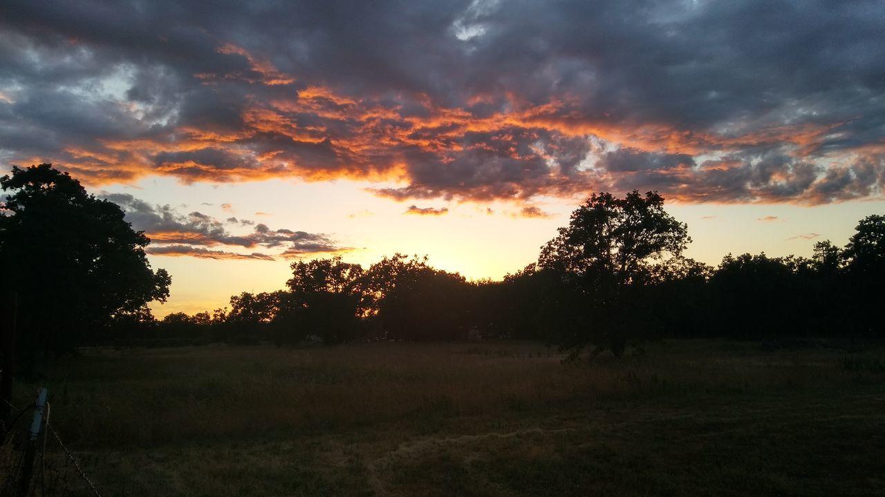 Tree Sunset Cloud - Sky Nature Beauty In Nature Sky Outdoors Landscape Field Oregon Oregon Sky Oregon Beauty