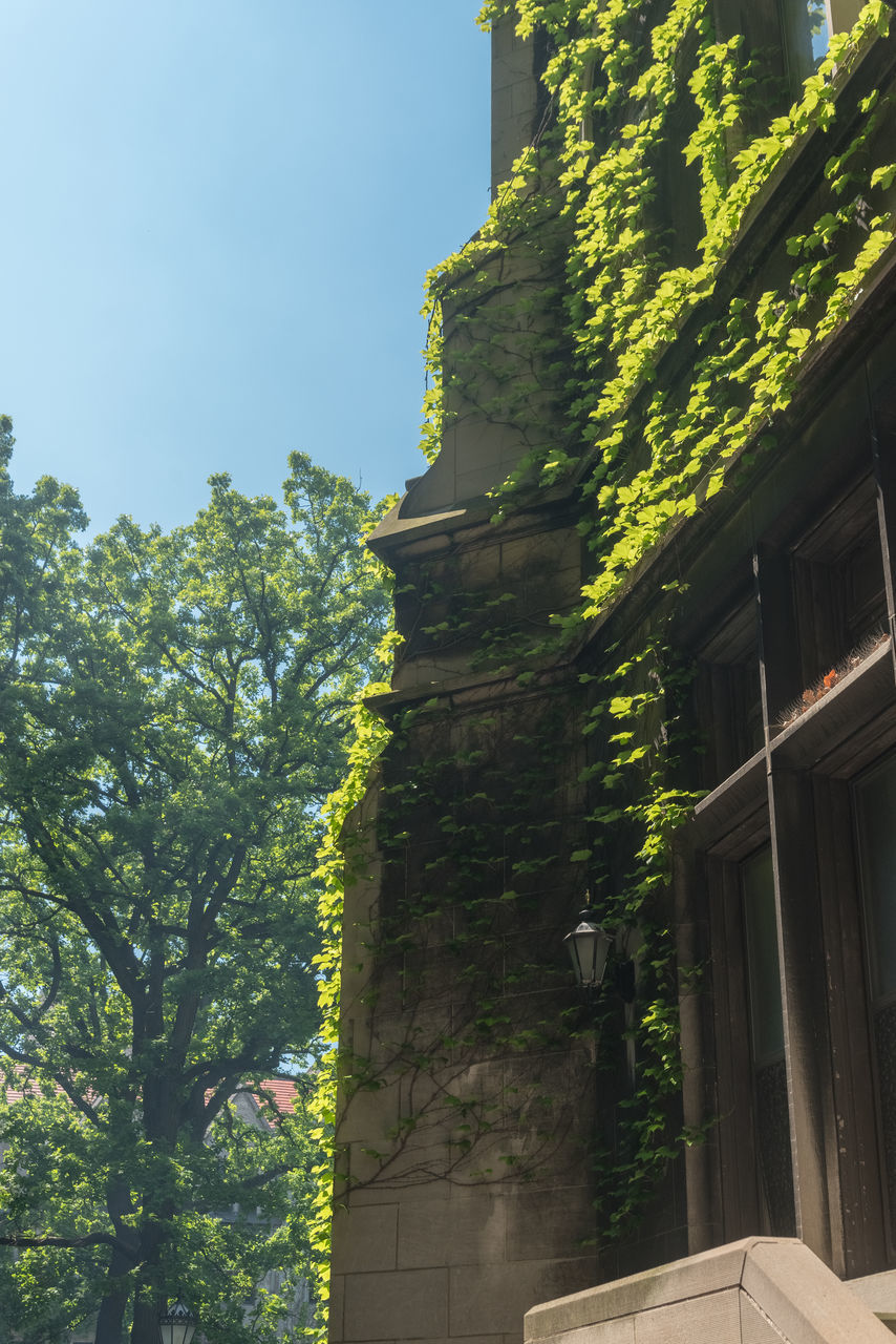 architecture, building exterior, low angle view, built structure, day, tree, no people, outdoors, green color, growth, sunlight, plant, ivy, nature, sky, close-up