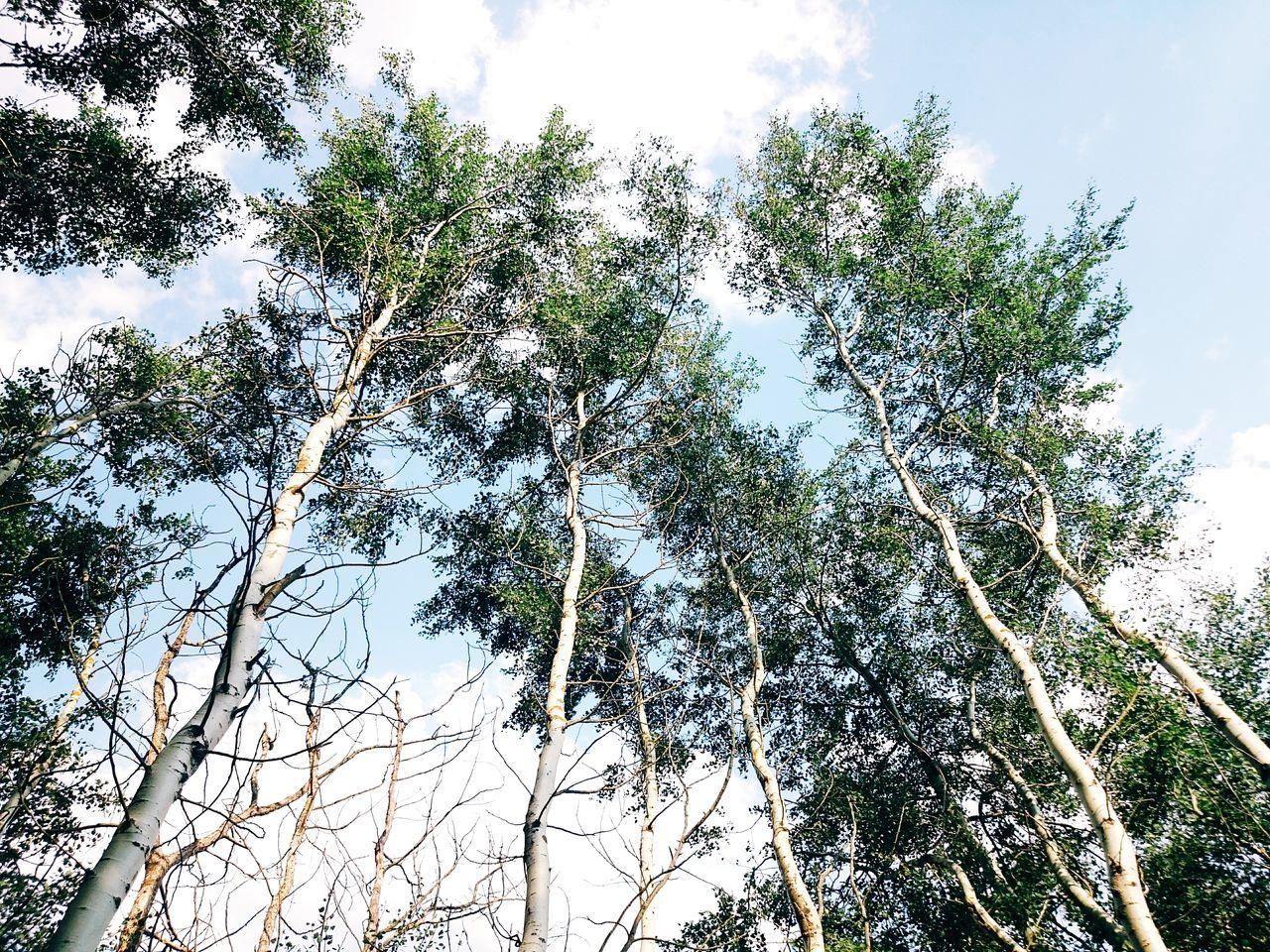 Open Edit Nature_collection Stepoutside Naturelovers Nature_perfection Ichhabnocheinenkofferinforst Wanderlust