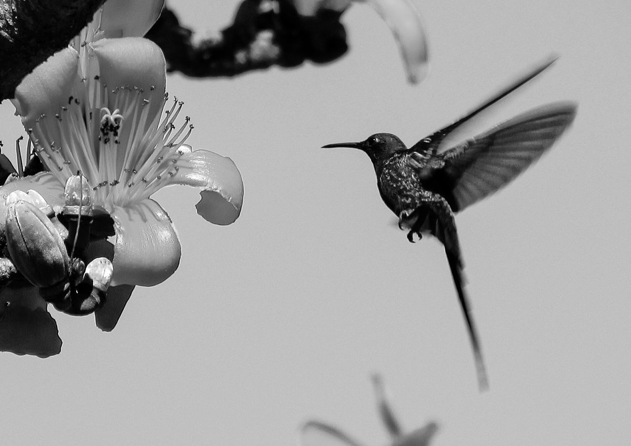Hummingbird enjoying the flower Animal Animal Themes Animal Wildlife Animals In The Wild Beauty In Nature Bird Bird Photography Birds Birds_collection Close-up Day Flower Flowers Flying Fragility Hummingbird Hummingbirds Insect Nature No People One Animal Outdoors Wing Wings Winter