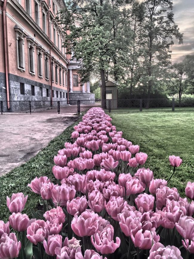 Михайловскийзамок михайловский замок Тюльпаны цветы HDR Spb Питер Landscape Ландшафт