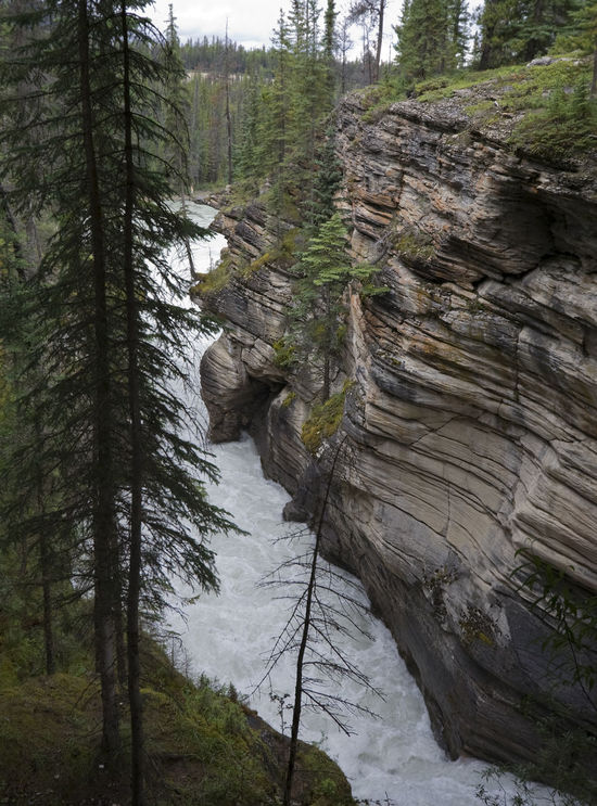 athabasca falls, view into the gorge - jasper national park, alberta, canada - UNESCO World Heritage Site Alberta Athabasca Falls Beauty In Nature Canada Canadian Rockies  Falling Water Forest Gorge Jasper National Park Landscape Limestone Nature No People Power In Nature Raging Rock Rock Formation Rocky Mountains Scenics Sedimentary Torrent Tree UNESCO World Heritage Site Water Waterfall