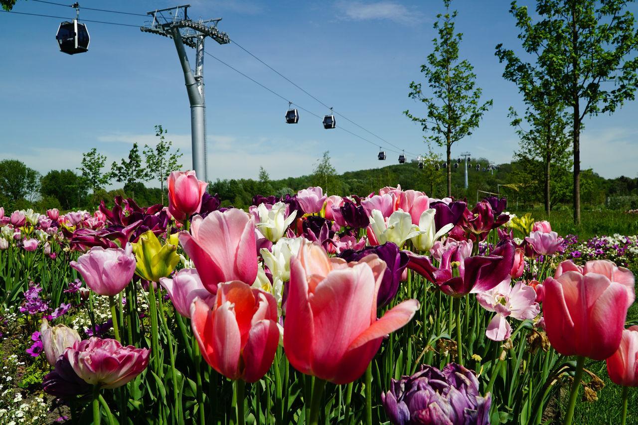 International Garden Exhibition IGA 2017 in Berlin. Internationale Gartenbauausstellung IGA 2017 in Berlin. Berlin Exhibition Expo Garden Gardening Green Color Marzahn Ropeway Tulip Tulip Fields Tulips