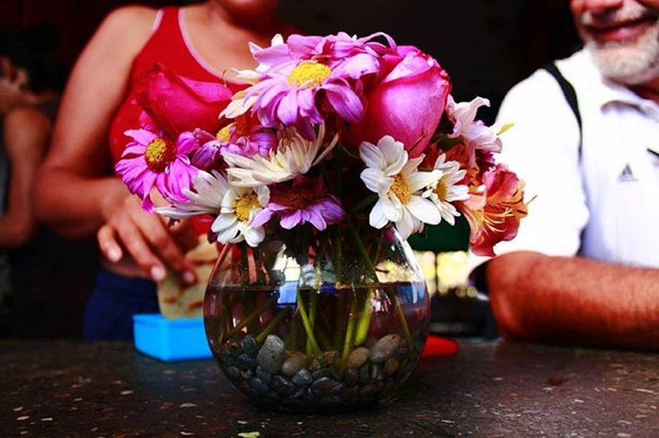 Family Família Florestaencantada Flores Flowers Natural Photo Photographer Photoart Fotoartistica Fotoarte