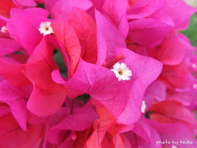 EyeEm Gallery Eyeemphotography 写真好きな人と繋がりたい Japan Photography EyeEm Best Shots Nature_collection Eye4photography  Flowers 花 ブーゲンビリア Okinawa_kei