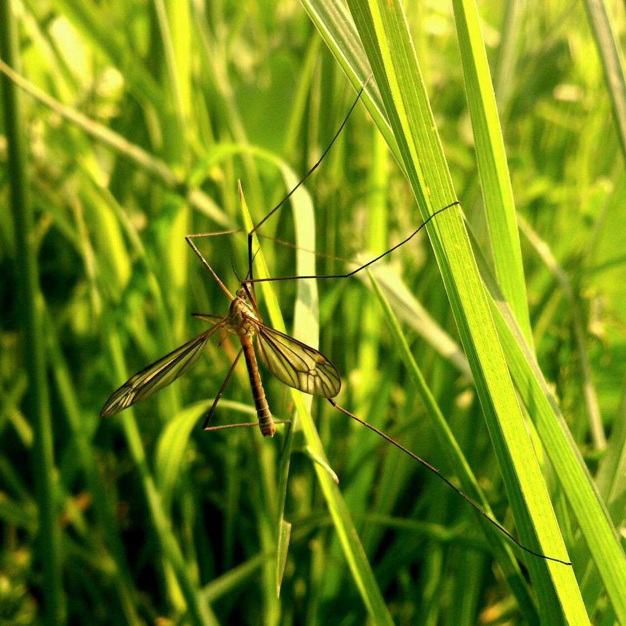 Close-up of mosquito on blade of grass