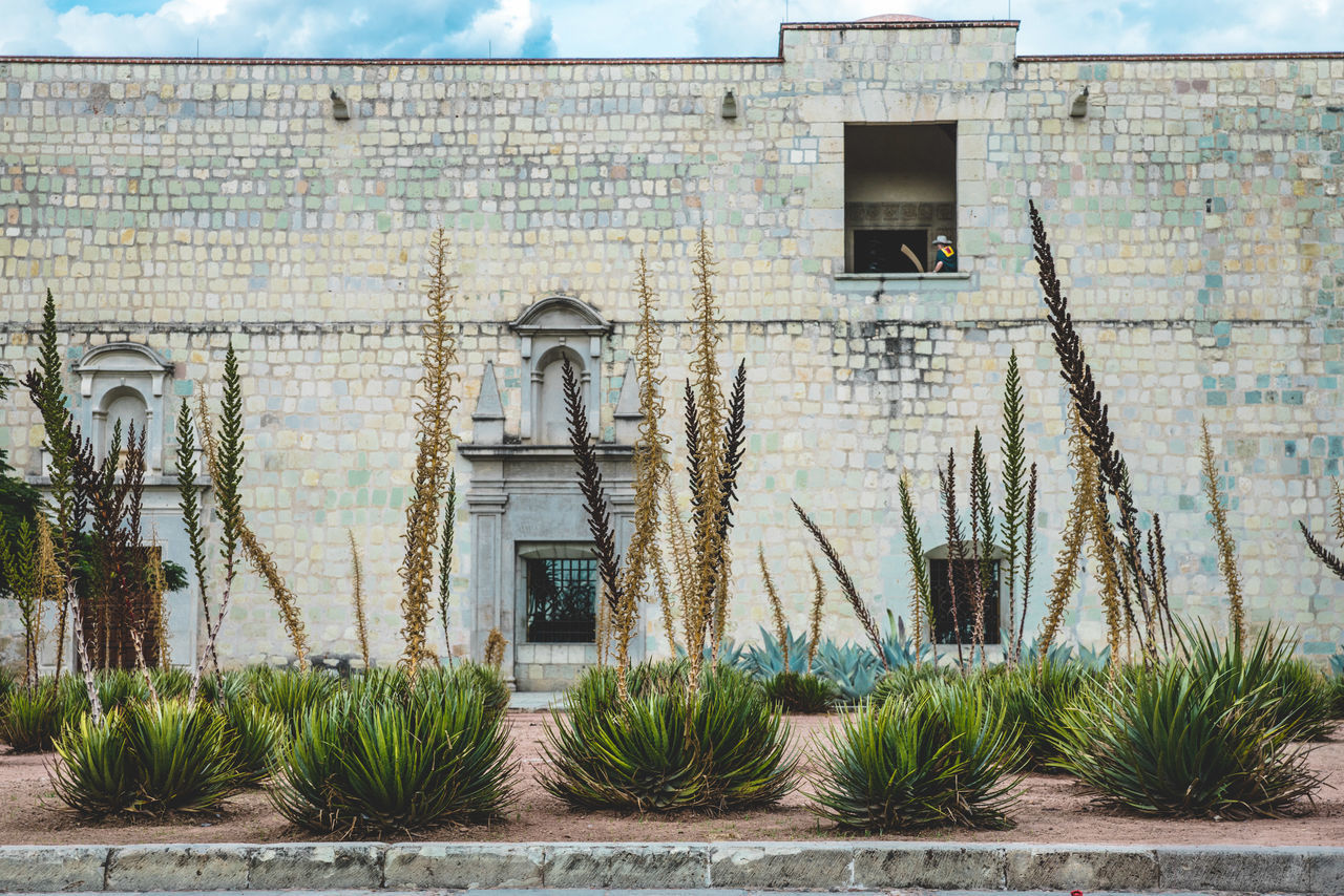 Architecture Brick Wall Building Building Exterior Built Structure Day Exterior Growing Growth Ivy Mexico No People Oaxaca Old Outdoors Plant Residential Building Residential Structure Run-down TOWNSCAPE Travel Travel Destinations Travel Photography Village Village Life