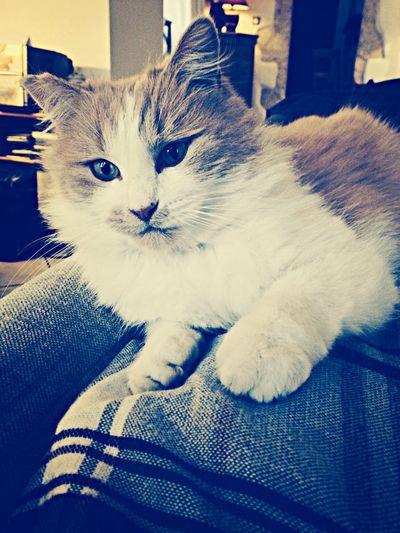 """Moi vouloir être chat"" Miaou Cat Bamboo My Pretty Cat ❤️?"