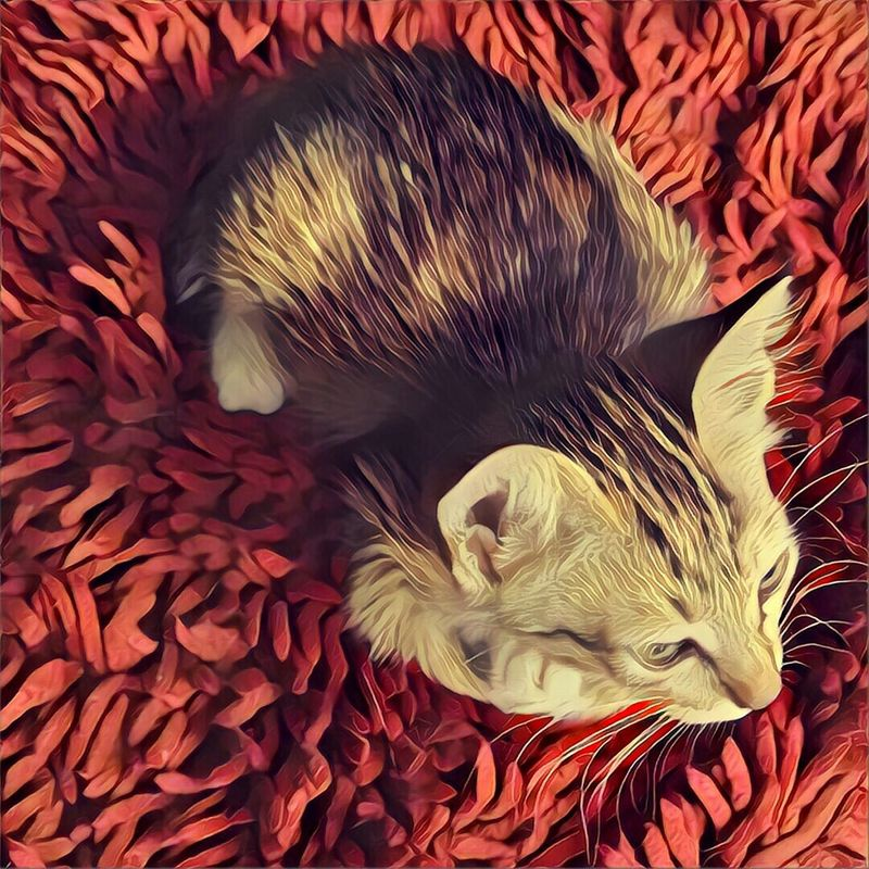 Cats Pets Feline Kittens Indoors  No People Domestic Cat On Carpet Mammal Red Background Resting Time