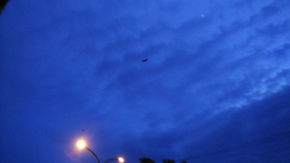 Adapted To The City Flying Sky No People Cloud - Sky Smoke - Physical Structure Mammel Air Vehicle Outdoors