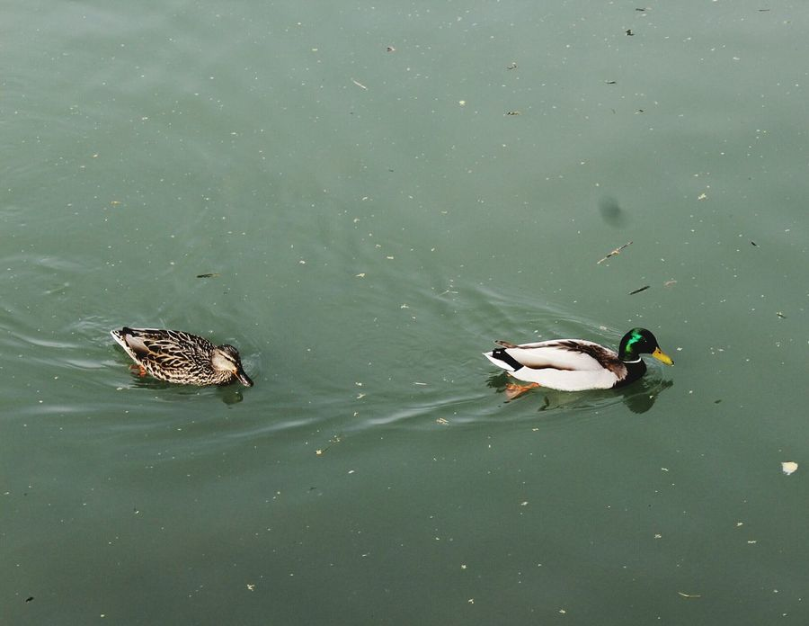 HEyy .. wait for me !! Lovely Patitos Nature Cute Animals