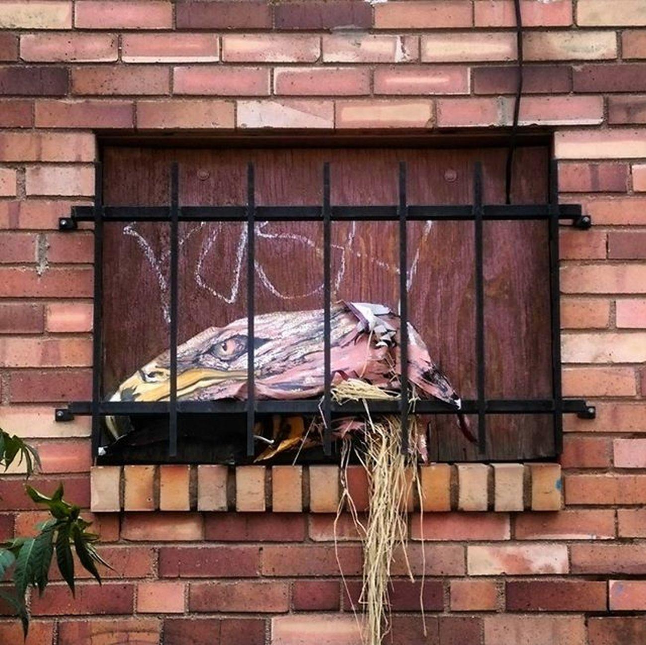 Streetart Denverstreetart Tags Denvertags Wheatpaste Pasteups Pasteup Windows Windowporn Eagleart