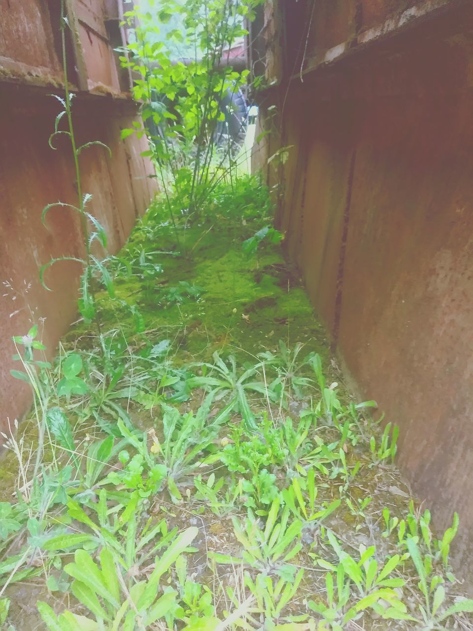 plant, built structure, architecture, outdoors, no people, day, building exterior, growth, nature, grass, tree