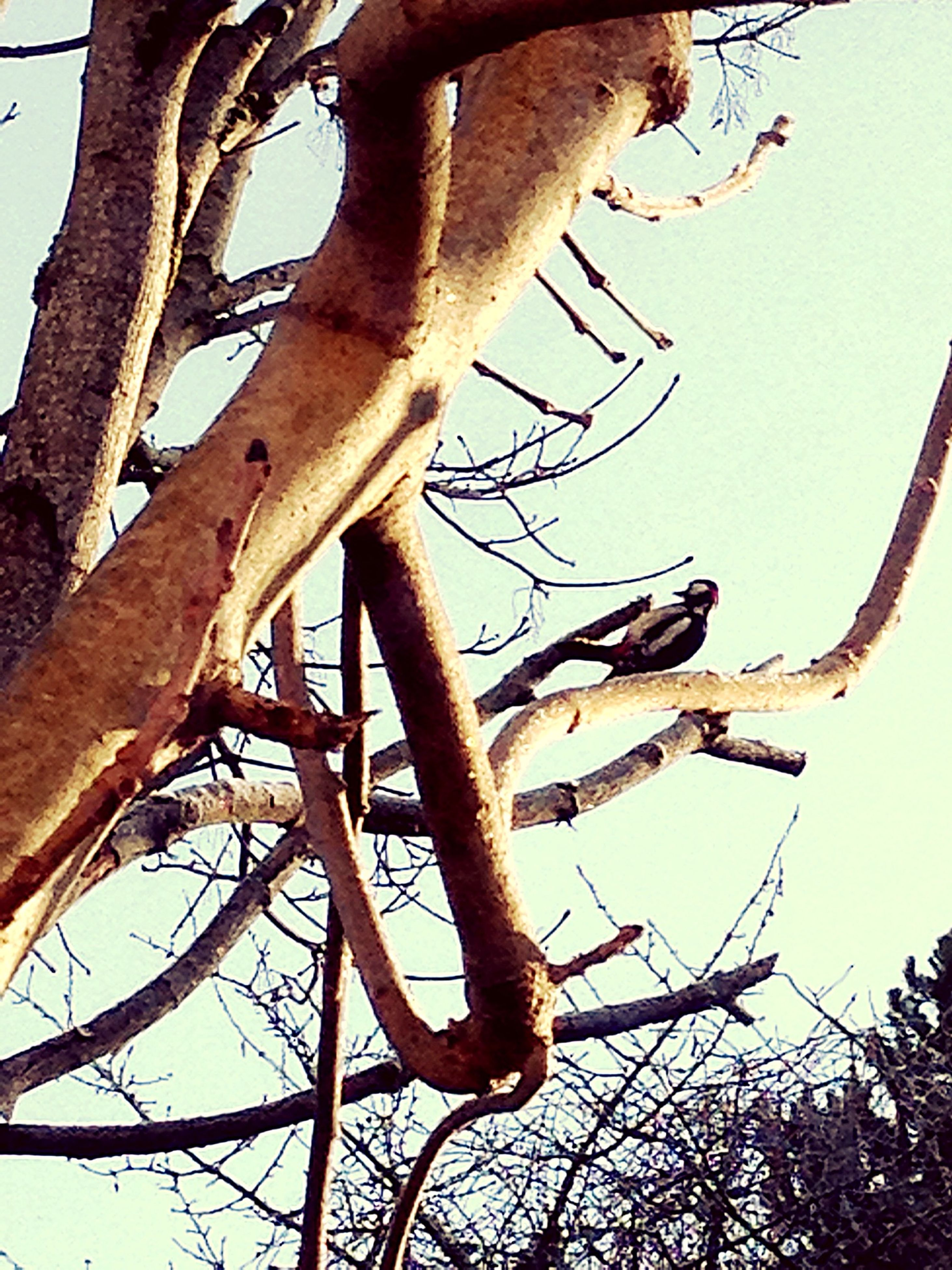 low angle view, branch, tree, animal themes, animals in the wild, clear sky, wildlife, sky, one animal, outdoors, nature, day, perching, close-up, no people, metal, tree trunk, bare tree, rusty, sunlight