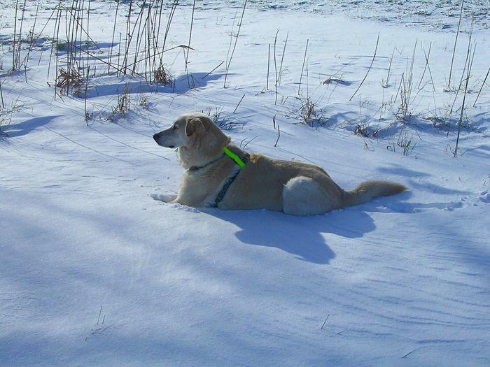 Wishy A Dogs Life Snow Dog Schneehase I Love My Dog