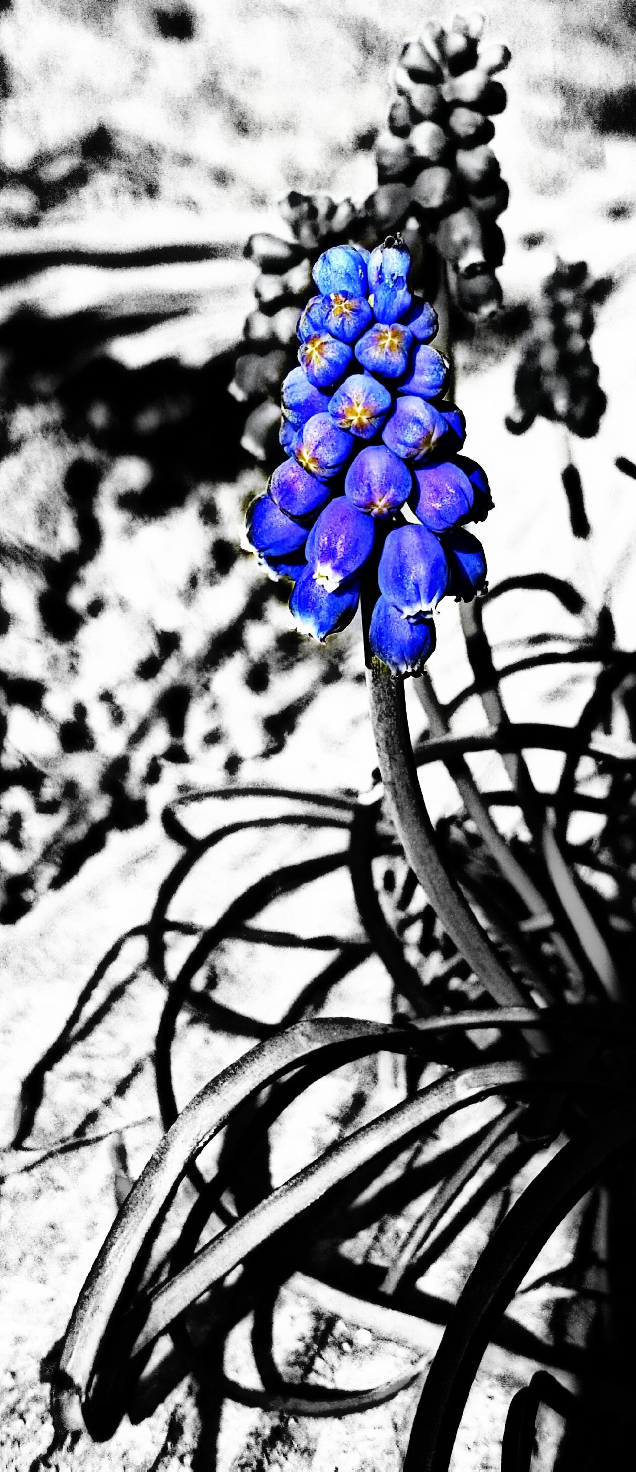 KSMITH22 Edited Nature Beauty In Nature Black Background Colorsplash Close-up Calm Flower Photography EyeEm EyeEm Nature Lover Eyeem Market EyeEm Flower