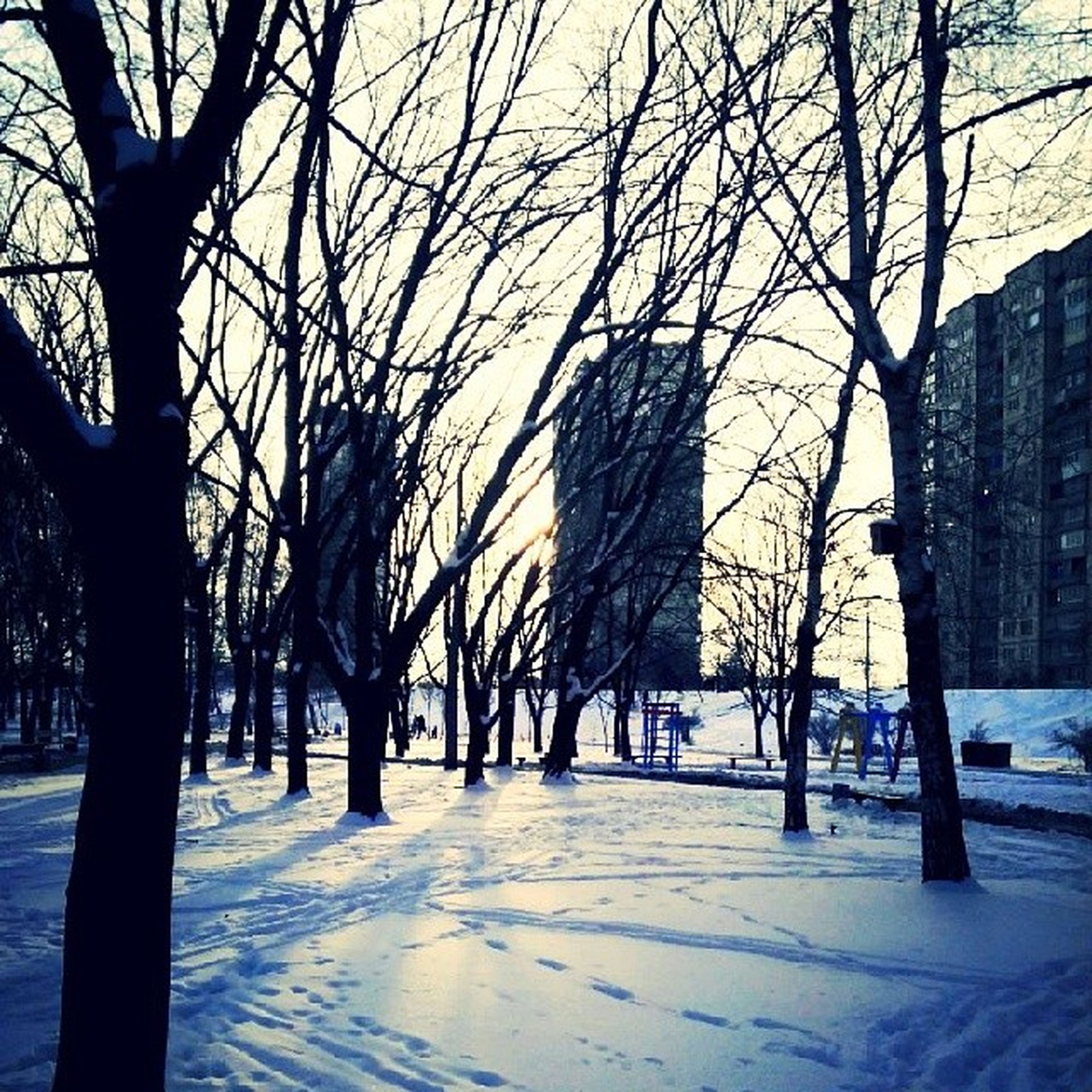 bare tree, tree, winter, snow, cold temperature, branch, tree trunk, built structure, building exterior, architecture, season, nature, sky, weather, city, covering, tranquility, street, road, treelined