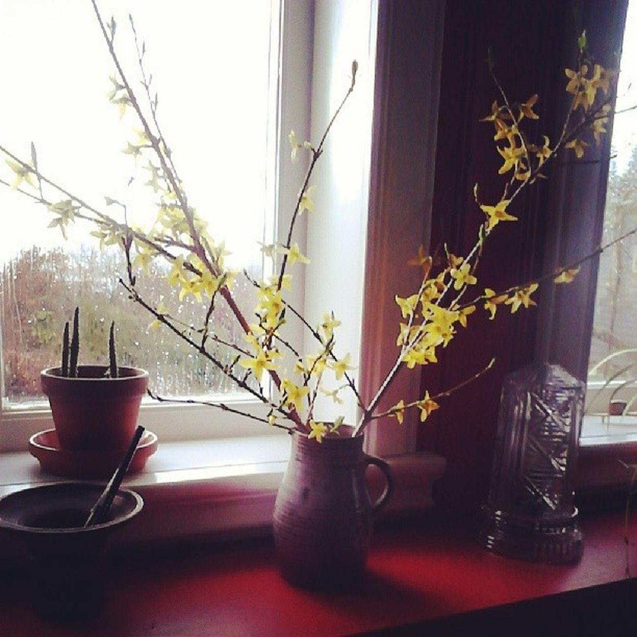 Rain Winterforever Bergen