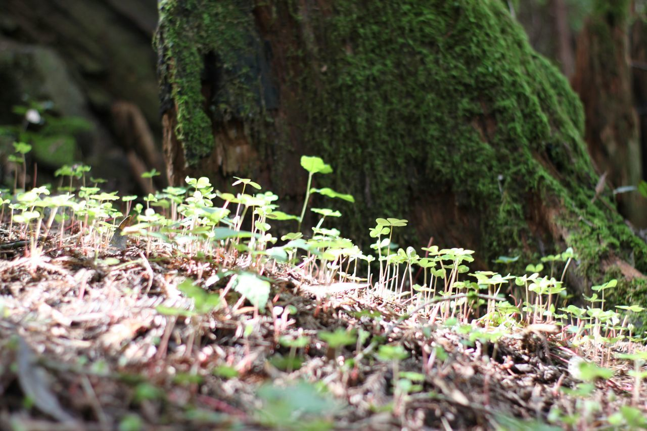 growth, nature, plant, no people, tree trunk, selective focus, green color, day, outdoors, leaf, tree, moss, beauty in nature, close-up, tranquility, forest, fragility, fungus, toadstool, freshness