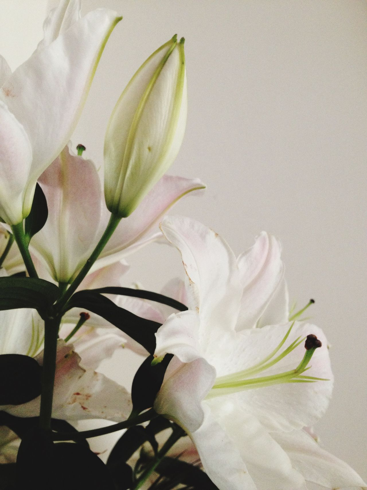 Beautiful stock photos of orchid, beauty in nature, blooming, blossom, botany