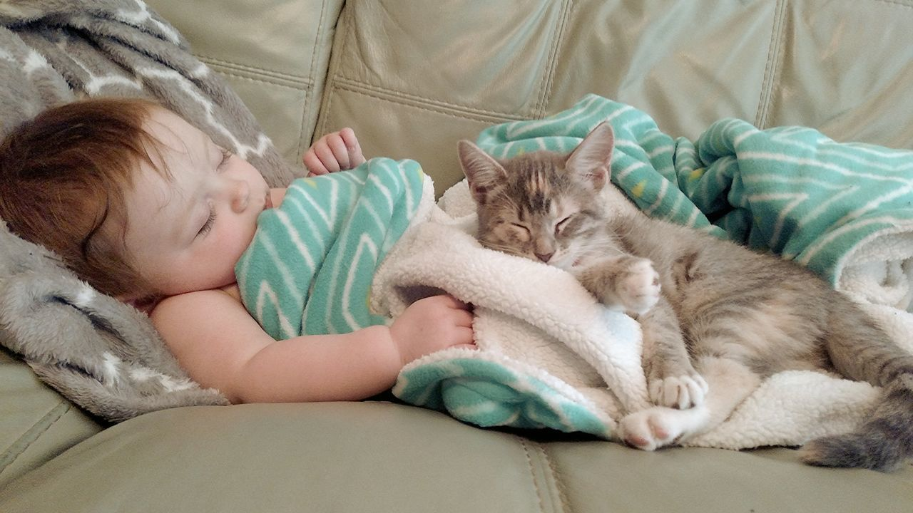 Beautiful stock photos of baby katzen, 6-11 Months, Animal Themes, Baby, Baby Girls