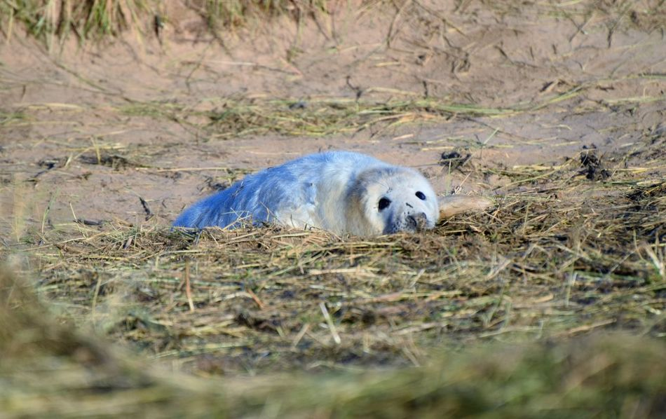 Animal Themes Animal Wildlife Animals In The Wild Baby Seal Blue Day Mammal Nature No People Outdoors