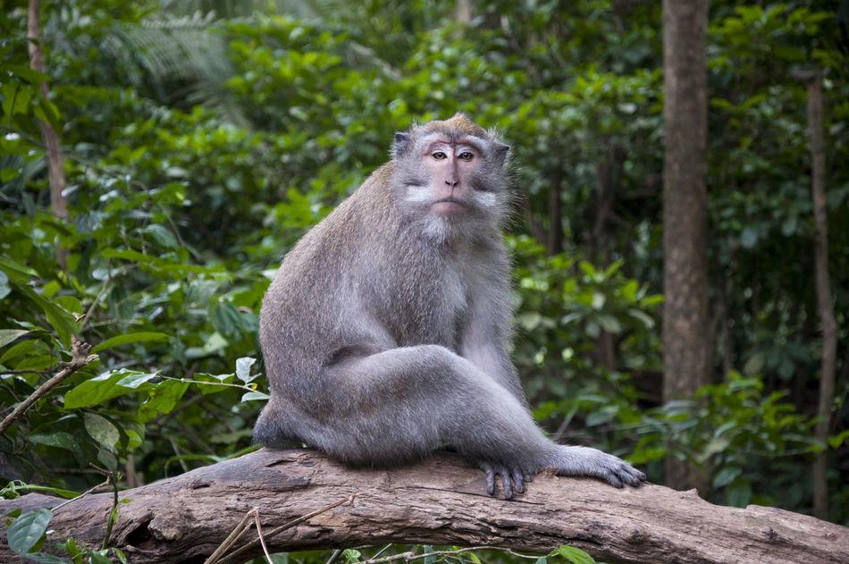 Animal Animal Wildlife Animals In The Wild Bali Eye4photography  EyeEm Best Edits EyeEm Best Shots EyeEm Nature Lover EyeEmBestPics Forrest Monkey Monkey Forest Travel Traveling Ubud