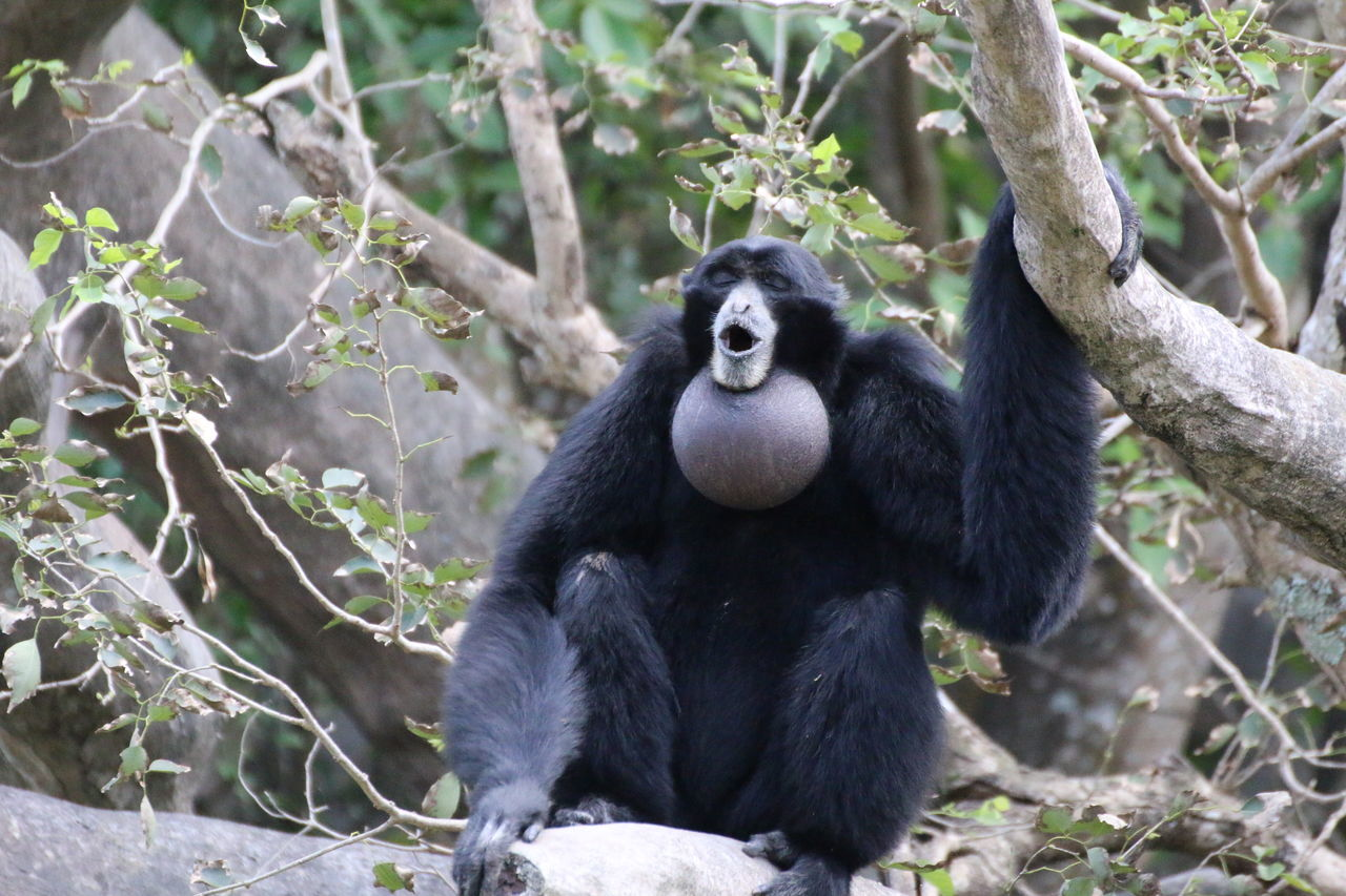 Low Angle View Of Chimpanzee Sitting On Tree Branch