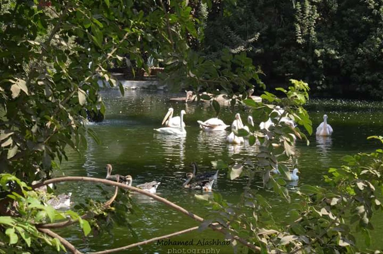 ZOO-PHOTO Zoophotography Evryday Foto In Cairo Natural Egypt Naturalism Water Tree